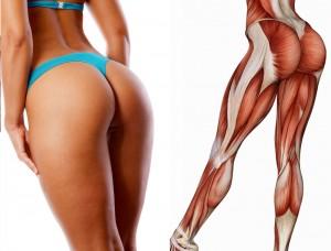 90 muscles in female lower body